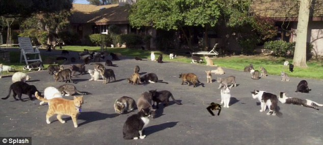Care-free: The feline haven is California's largest no-kill, no cage sanctuary and is also a home to 15 dogs