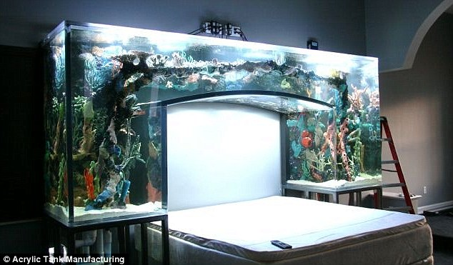 nfl star's chad ochocinco's amazing fish tank in his bedroom