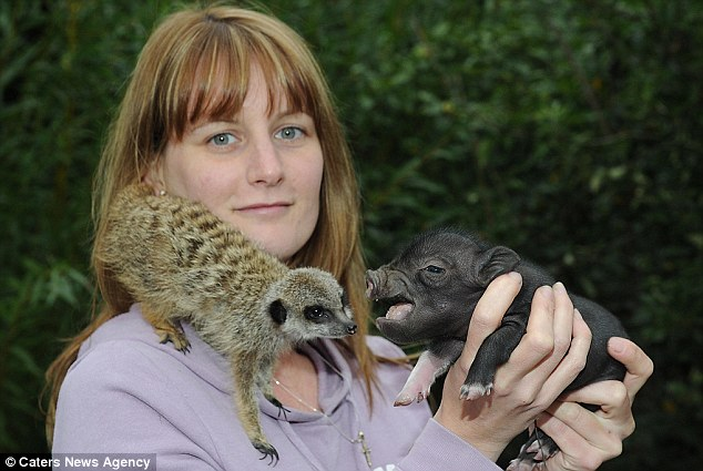 Miniature rascals: Kelly Shambly, 24, an animal career at Tropical Inc poses with Timon and Pumbaa