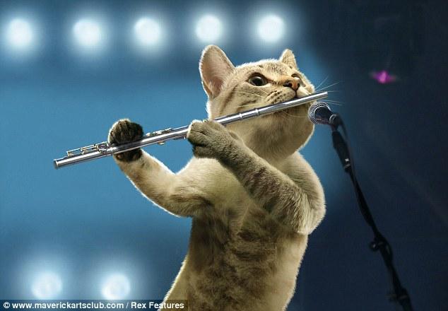 Musical Cats Christmas Calendar Daily Mail Online