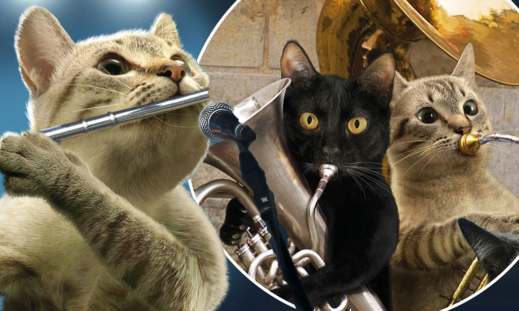 Musical Cats Christmas Calendar Daily Mail Online