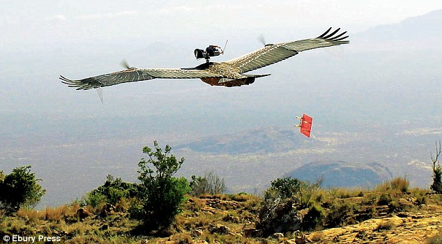 The remote-controlled 'vulture-cam' glider, which was flown with the birds