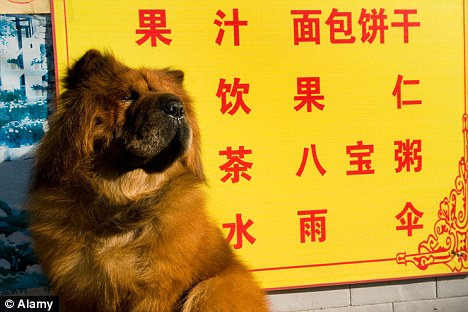 China Unleashes Big Dog Ban As It Stops People Keeping Any