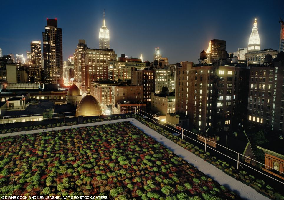 Manhattan marvel: The first green roof the photographers visited, on top of Cook and Fox architects in New York