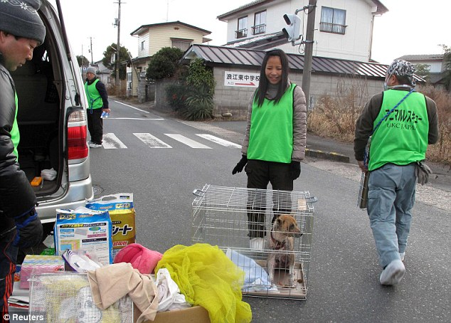 Rescue mission: Animal welfare groups were given special permission to enter the 20 mile exclusion zone late last year
