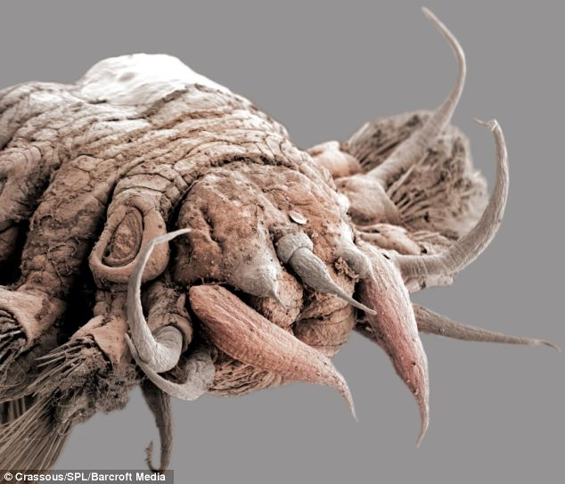 The images capture in extraordinary detail how the many different scale worms have evolved