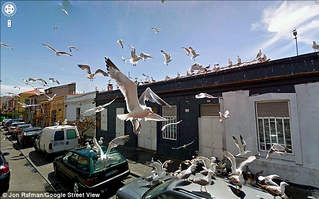 In flight: A kit of pigeons takes to the air as the vehicles passes the Herois de Franca, in Matosinhos, Portugal