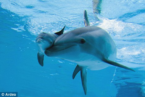 Experts believe dolphins should have the same kind of rights as humans in being able to live peacefully in a safe environment