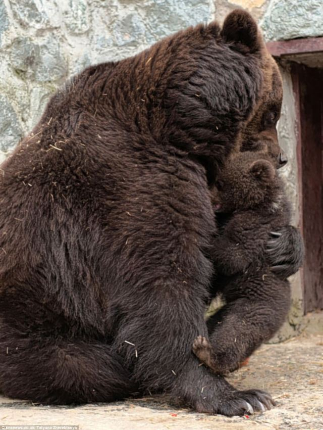 There, there: He gets a bear-hug to show the row is over