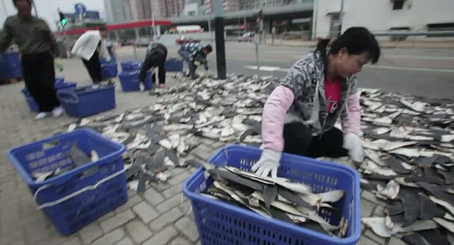 High demand: Shark finning is becoming more common with the increase in China's wealthy citizens, who serve the special soup at celebrations.