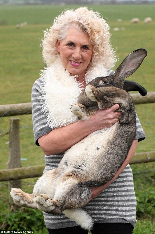 Easter 2012 Worlds Biggest Bunny Rabbit Darius Is 4ft