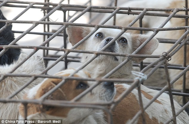 Business: The dogs in this case had a fortunate escape but the trade in dog meat means many more animals are not as lucky