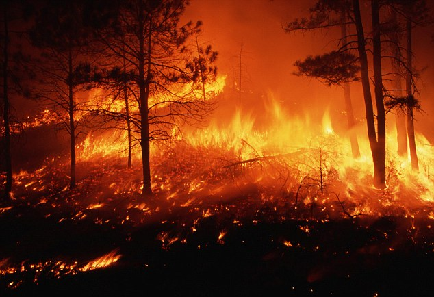 'Unleash Hell': Al Qaeda magazine describes in detail how to start huge forest fires across the U.S.