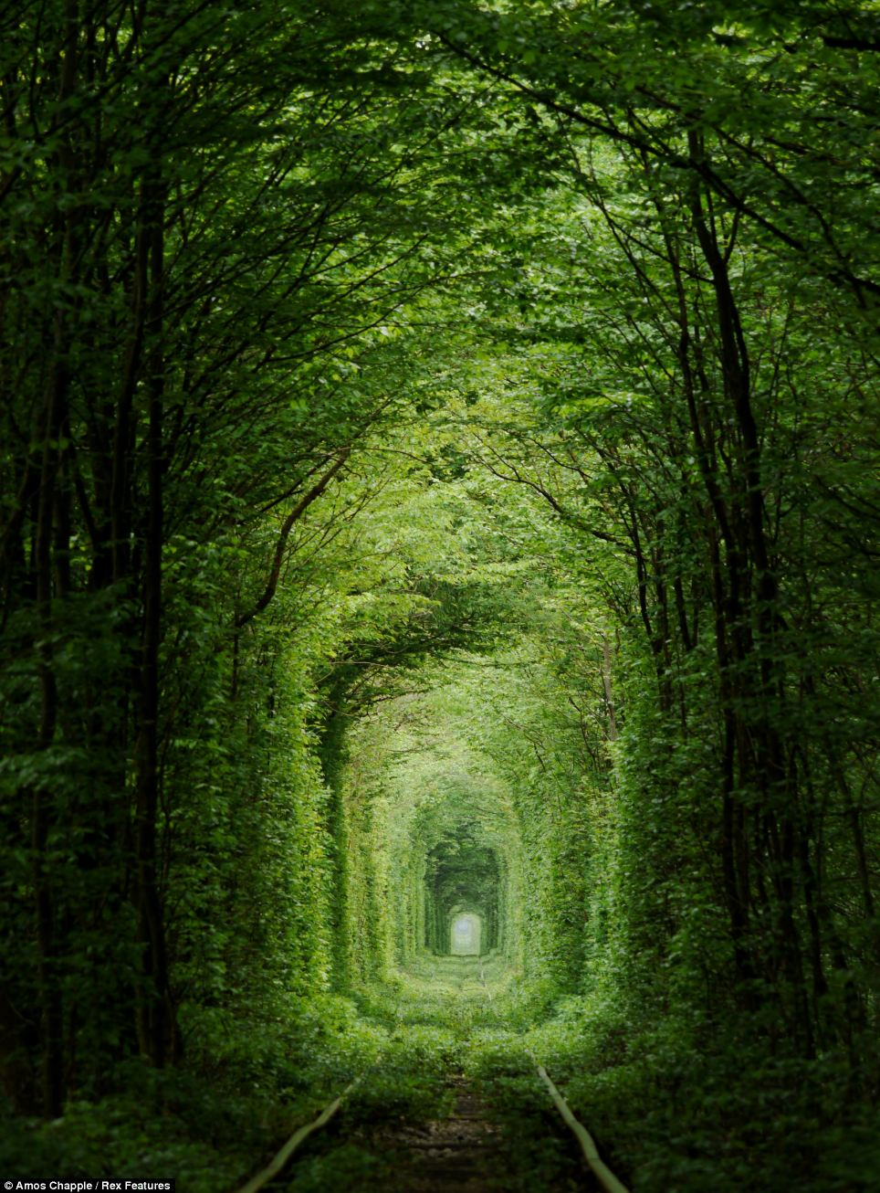 Just The Ticket For Popping The Question The Romantic Tunnel Of Love Railway Line Thats So