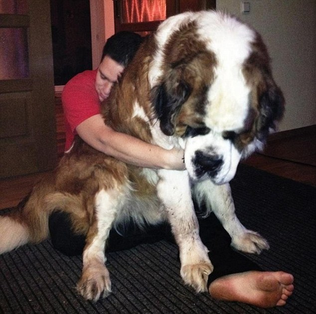 It mutt be love: A pet owner with his arms round a massive, super-fluffy dog