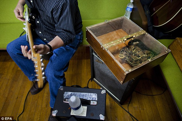 A snake box containing a highly venomous timber rattlesnake rests on a speaker