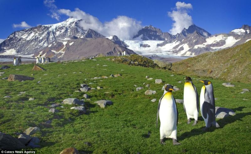 Топ 5 - Интересные факты об Антарктиде. Почему белые медведи не едят пингвинов, температура + 30 °С и что такое антарктический оазис.. Температура + 30 °С и что такое антарктический оазис. Антарктида (Южный полюс) и Арктика (Северный полюс) - основное отличие. Абсолютный минимум температуры, какая погода в Антарктиде и на Северном полюсе, знаете где теплее? Эти и другие интересные факты об Антарктиде и Арктике.