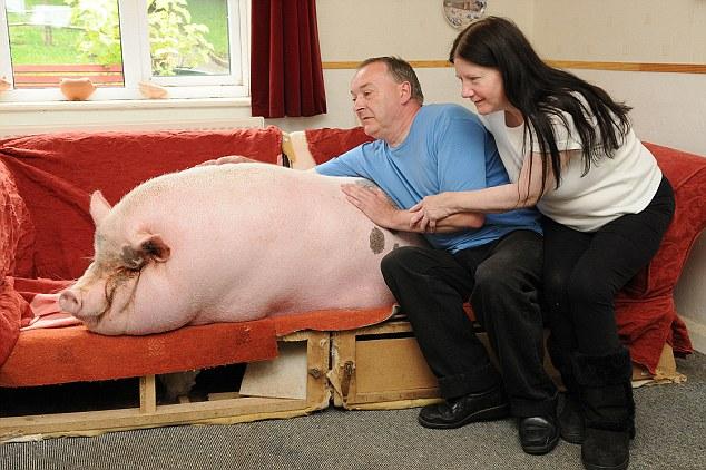 Parte de la familia: A pesar de su tamaño, los Webb dicen que están encantados de compartir su casa con el bebé