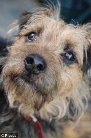 Country Life Declare Border Terriers Are The Ideal Canine