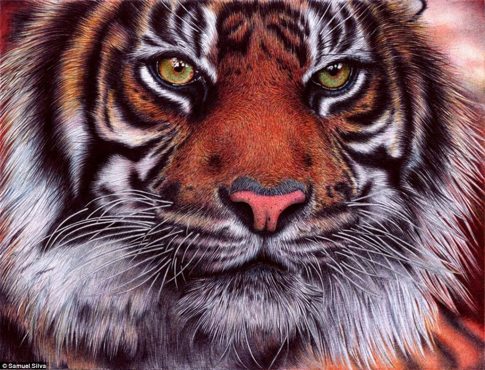 Speaking about his picture of a Sumatran tiger, which took around 20 hours to finish, Silva said: 'This one is wild, that's why I love it.'