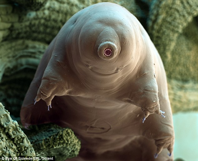 """The Water Bear"""
