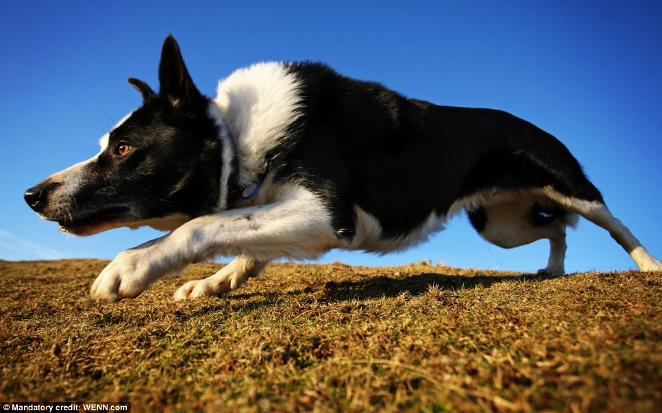 This year's overall winner was Catherine Laurenson, from Glasgow, for her photo of a Border Collie