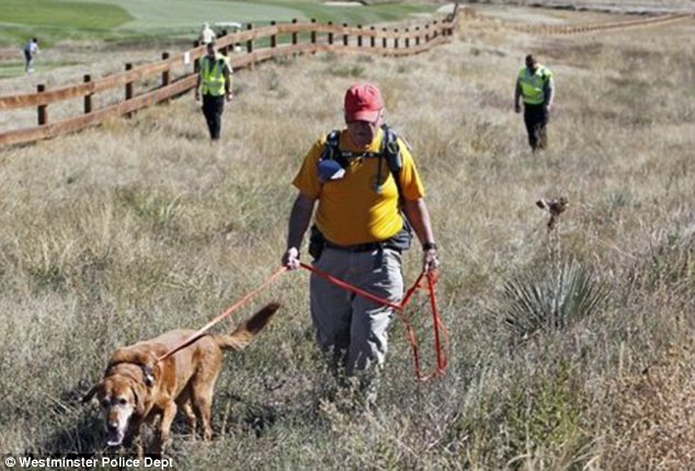 Hunt: Denis McLaughlin leads his search and rescue dog through a field of tall grass searching for Jessica Ridgeway near her home in Westminster on Monday
