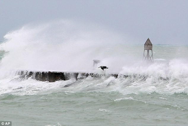 Upwind: A pelican flies with the wind produced by hurricane Sandy's outer bands at Haulover Beach on Thursday in Miami