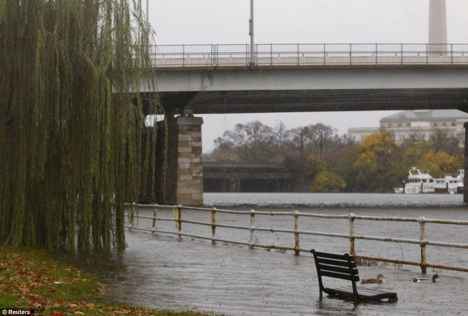 Supurante en: Los patos nadar en aguas que se han superpuesto un dique sobre el río Potomac en Washington el lunes, antes de la tierra huracán alcance