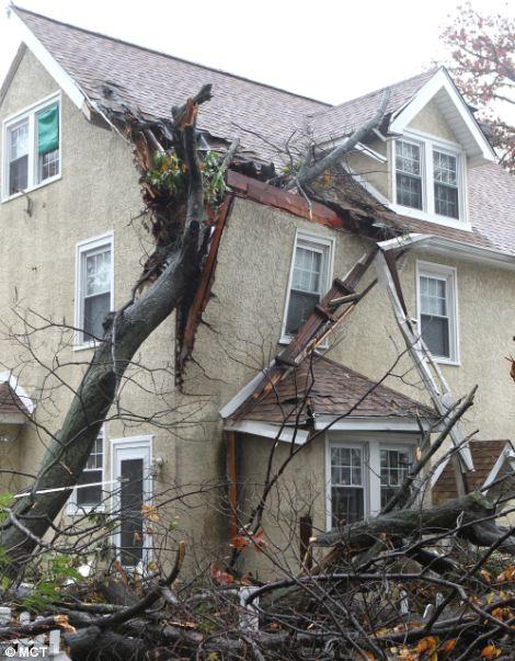 Alrededor de las 5 AM a árbol cayó en el carril de la Escuela 4023 en Drexel Hill, Condado de Delaware, Pennsylvania, Lunes, 29 de octubre 2012, visto desde el patio trasero donde también daña la cubierta de un vecino.  El niño fue llevado al hospital.