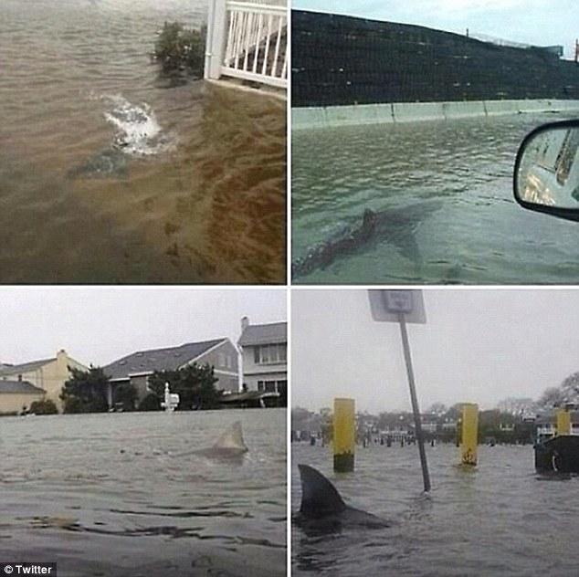 Superstorm Sandy Shark Streets
