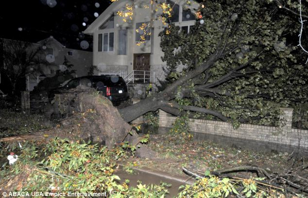 Tragedy: A large tree is felled in Tottenville - the area was in one of the state's mandatory evacuation zones