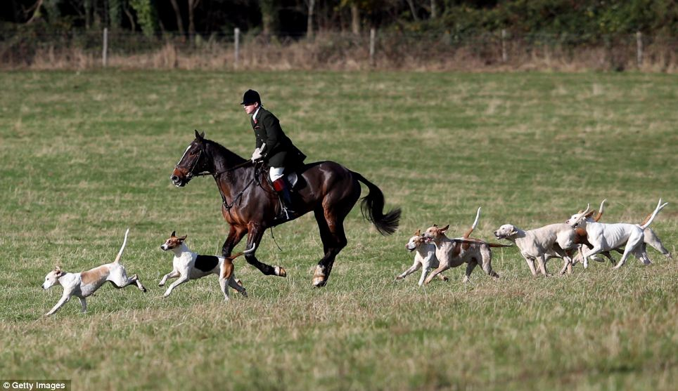 The earliest records of hounds being kennelled at Badminton date back to 1640 when the then Marquis of Worcester hunted mainly deer