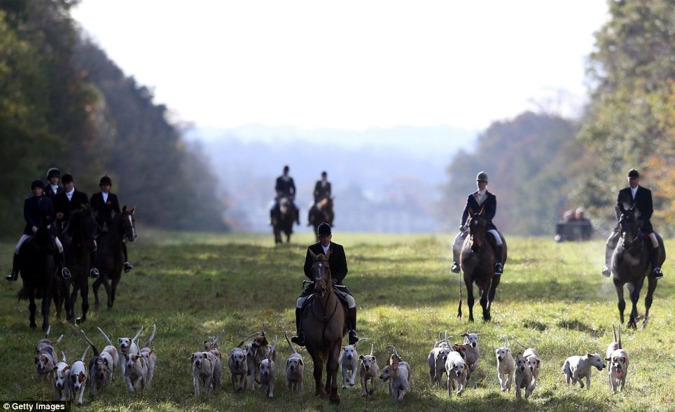 This rider and the pack of hounds lead the way