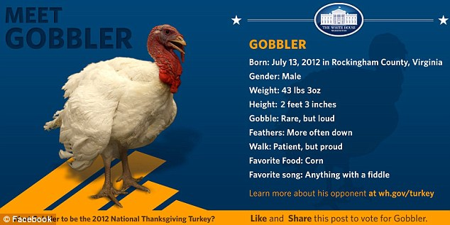 Competition: Gobbler is also in the running and enjoys fiddle music and corn