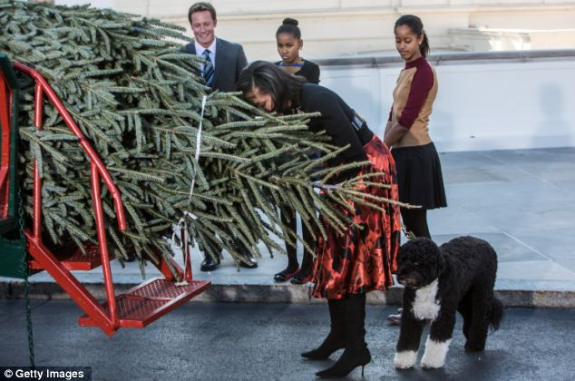 A closer look: Michelle Obama smells the tree, which was grown and harvested in Jefferson, North Carolina