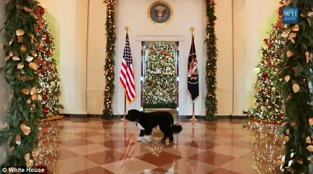 Thorough: Sometimes in slow motion, Bo inspects the decorations room by room