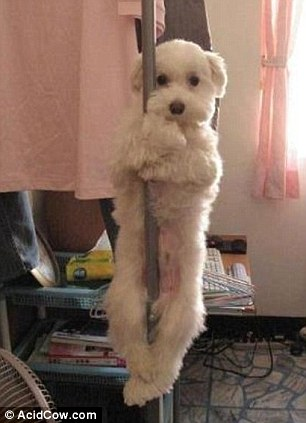 A playful pup gets to grip with pole dancing