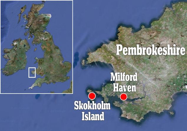 Skokholm is a remote island in the Celtic Sea about two miles off the coast ofPembrokeshire, Wales