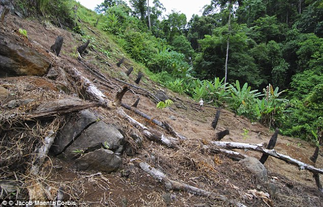 Slash and burn: Some scientists have claimed that deforestation, pictured in the Philippines in 2009, is having little effect on the health of the planet