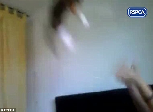 Vicious: The eight-week-old cat at one point appears to be knocked unconscious after smashing into the ceiling