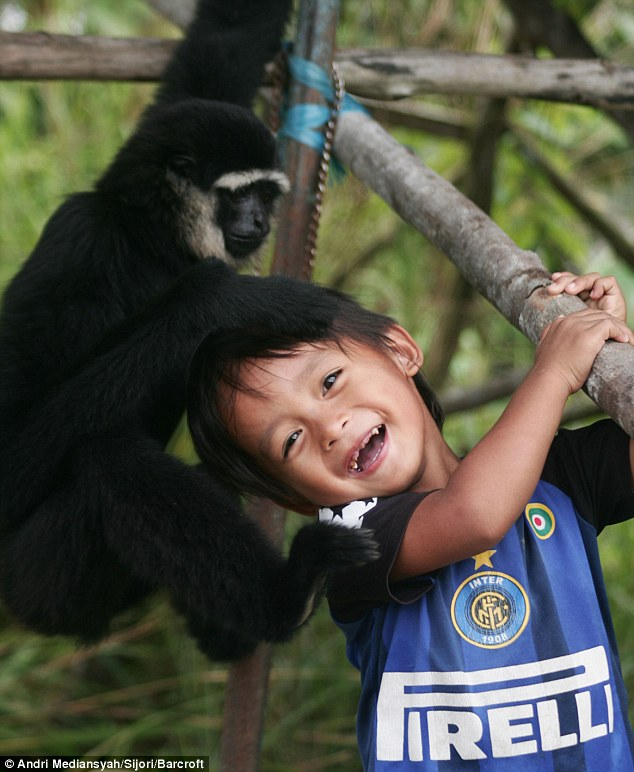 Meet the real life Mowgli: Boy on remote island forms friendship with black-furred gibbon | Daily Mail Online