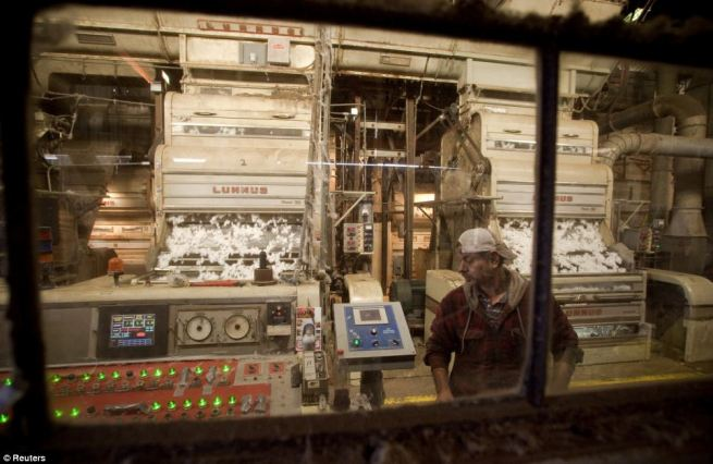 Expert: Gin operator, and skilled migrant worker, Robert Espino of Weslaco, Texas, watches the controls of a cotton gin in Minturn, South Carolina
