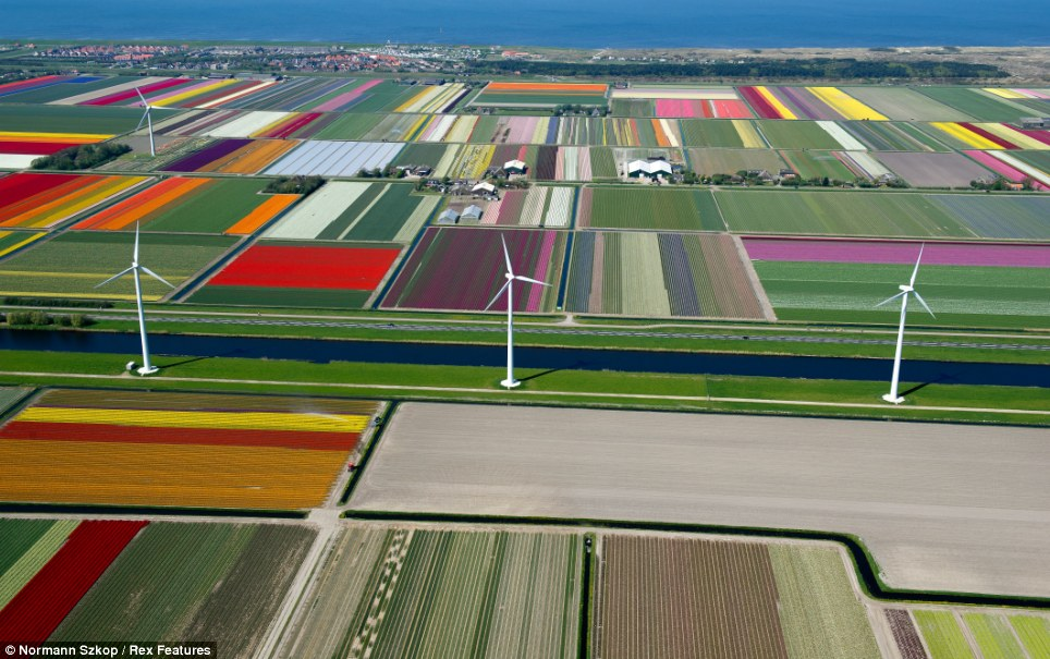 Mother nature's creation: The gigantic fields of flowers resemble a child's crayon artwork