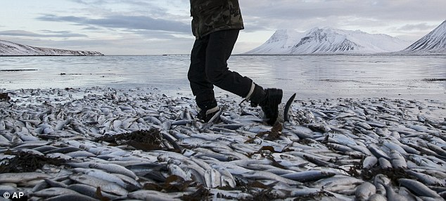 The Icelandic Government has agreed to fund research into the deaths as concern grows