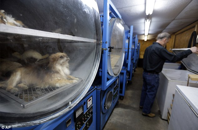 Image result for preservation of pets