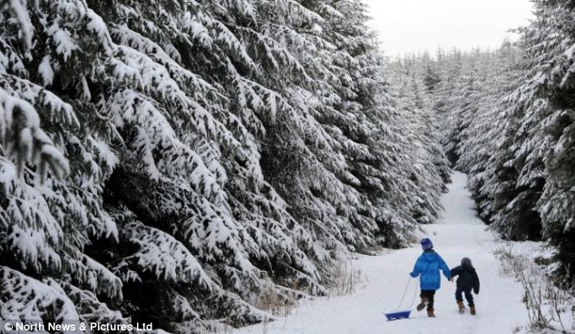 Children play amongst a beautiful snowy scene at a forest plantation in County Durham after heavy snow showers covered northern England in a blanket of snow yesterday
