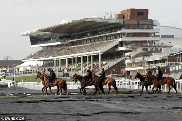 Icy conditions: Horses cross the course on day one of Cheltenham Festival which was covered in 65 acres of black insulation this morning to protect it from frost