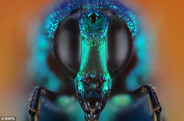 The close up pictures allow the vibrant colours that exist within the insect world around us to be seen
