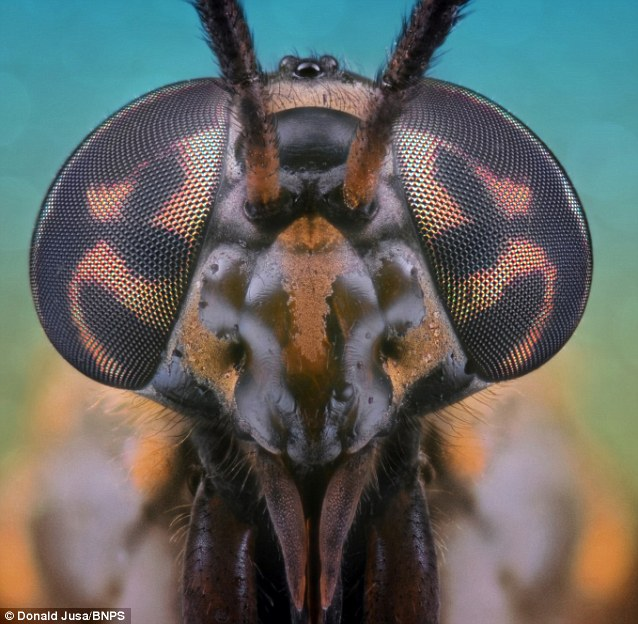 Photographer Donald Jusa used the concept of macro photography to capture these unique pictures